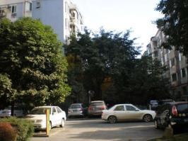 香木林花园
