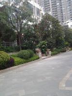 泰禾红树林a区