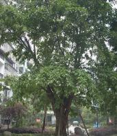 星海·绿景清城位于碧水槟城东南方