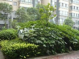 天地源·枫林绿洲